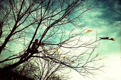 kite-eating-tree